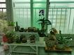 오랜만에 베란다 화단 정리, 새 화분 들이기 : 안시리움, 아이비, 스파티필름