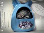 [전격입수] 달님이의 목욕장면~~~~~!!!!