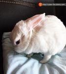 예쁜 토끼 쓰다듬기, 토끼랑 친해지려면...