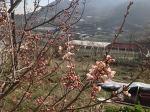 활짝 핀 앵두꽃이 벌을 불렀다.