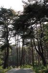 사진으로 보는 강릉여행