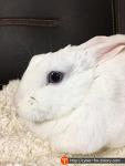 토끼 키우기, 편안한 휴식 시간