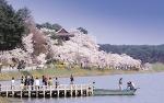 경포대 벚꽃축제와 4월 가볼만한곳인 전통의 멋을 간직한 오죽헌, 선교장 여행