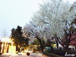 북촌골목여행, 서울의 숨겨진 벚꽃명소 정독도서관, 중앙고