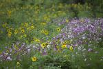 태백 구와우 고원 자생 식물원과 영주 무섬마을의 꽃들