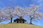 올림픽공원 벚꽃 봄꽃 시그마 24-105