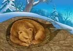 [유쾌한 간(肝)담회] 겨울 잠 자는 곰 뛰어난 간의 해독작용