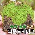 녹차 마블 초코 파운드케이크 만들기! 쫀쫀한 질감과 촉촉한 식감~ (How to make green tea marble chocolate pound cake)