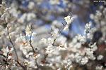 고궁의 봄 | 서울 가볼만한곳, 창덕궁, 경복궁