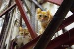 홍콩 몽콕 야시장 뒷골목에서 만난 도둑고양이들.