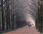 [담양여행] 겨울에도 너무나 멋있었던 담양 메타세콰이아길