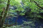 [아오모리] 며느리도 몰라, 시라카미 산지의 푸른 호수 아오이케
