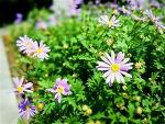 길거리 화단 꽃