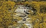 구례산수유축제, 구례산수유마을에서 만나는 봄나들이 갈만한곳