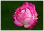 한강 봄꽃축제 4월 1일부터(출처. 국토부)