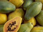 열대과일 파파야(木瓜)