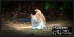 """귀엽고 매력적인 길고양이 """"미웡이"""" 영상 모음.YouTube"""