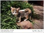 [적묘의 페루]아기고양이가 노니는 여행기념품점,쿠스코 피삭에서
