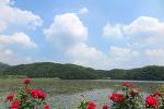[양평 / 양수역 / 플라워카페 화우] 양평, 양수역 주변 여행 # 엄마와의 데이트 # 플라워카페, 화우 2018