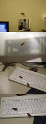 바퀴벌래 만들기