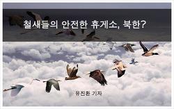 철새들의 안전한 휴게소, 북한?