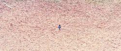 뿔논병아리 가족이란 무엇이고, 부모애를 느낄 수 있는 뿔논병아리  Great Crested Grebe