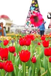 봄 향기로 가득한 에버랜드 포시즌스가든 대 공개!