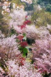 드림로드의 봄