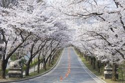 에버랜드, 튤립에 벚꽃까지 어우러진 '꽃대궐' 변신
