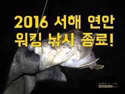 2016 서해 보령권 워킹낚시 종료합니다.~