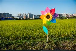 꽃이 있는 풍경