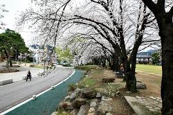 무주의 4월, 꽃길을 걷다!