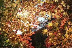 가을, 좋다