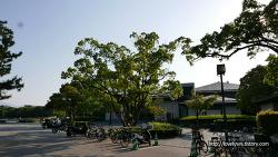 [후쿠오카여행] 힐링하기 좋은 '오호리공원' / 하카타역에서 오호리공원 가는법