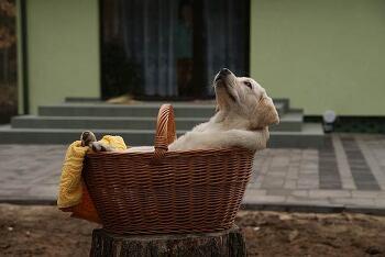 강아지 성장 시기별 사료 급여양 과 급여방법(애견필수상식)