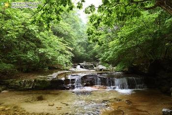 푸른 숲과 맑은 물~ '마음이 편안해지는 숲속 계곡 3곳'