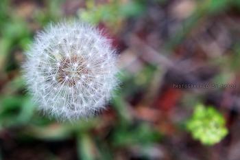 자연 그대로의 아름다움 [4pic]