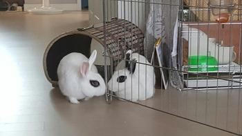 토슬이와 복실이의 후손들, 사이좋은 토끼들