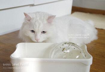 [히히동이] 희동이를 위한 겨울철 수분 공급 노하우 (고양이 물 먹이기)
