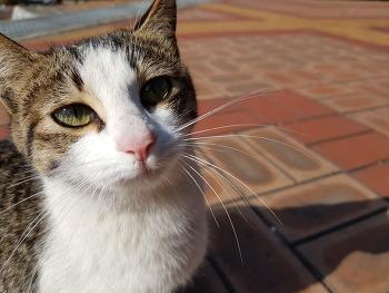 대청댐 사진 찍힐 줄 아는 고양이