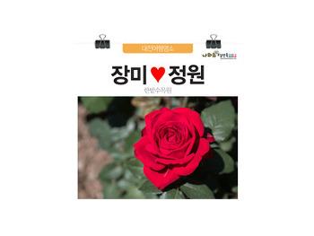 주말가볼만한곳 대전한밭수목원 장미정원, 행복이 활짝~