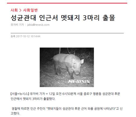(혜화)멧돼지의 잦은 도심 출몰, 대응방법을 알려드립니다.