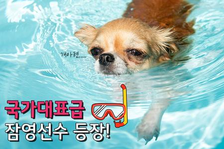 국가대표급 잠영선수 등장!