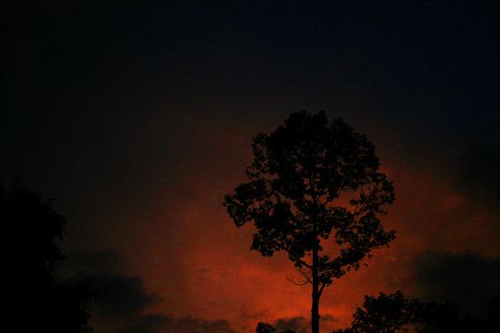 말레이시아 막바지 정글살이
