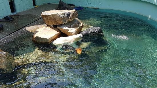 에버랜드 북극곰