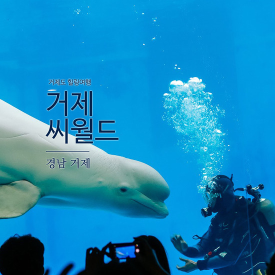 [거제도여행 Part 2] 돌고래 공연을 볼 수 있었던 거제씨월드에 다녀왔습니다.