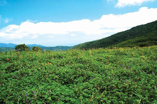 [여름휴가가볼만한곳] 여름휴가 국립공원여행