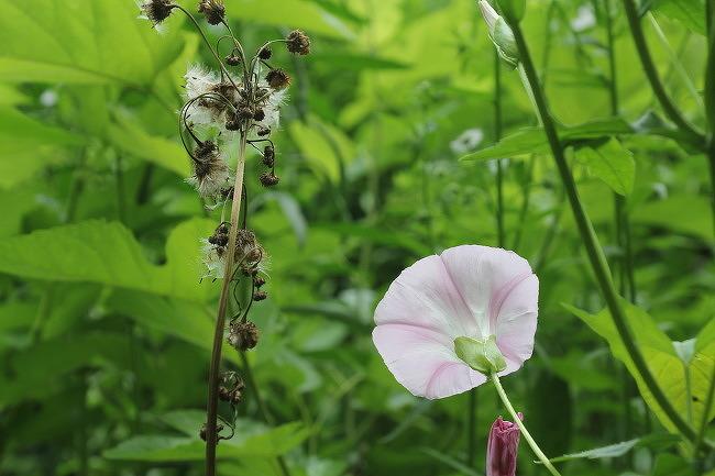 금강주변 길거리의 꽃들