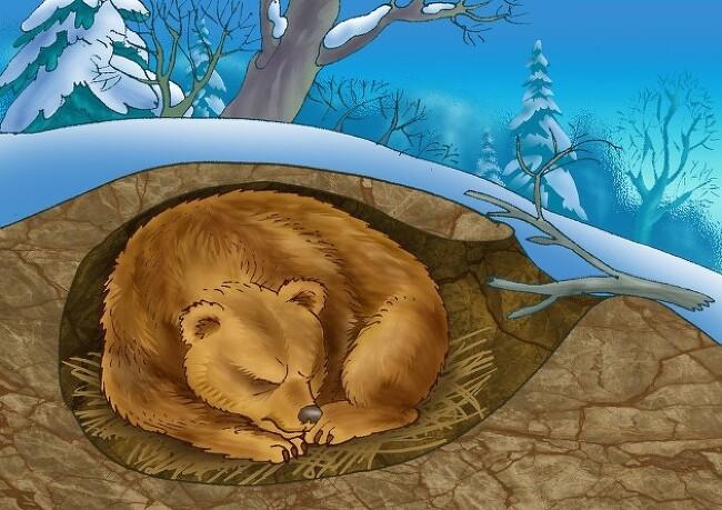 [유쾌한 간(肝)담회] 겨울 잠 자는 곰 뛰어난..