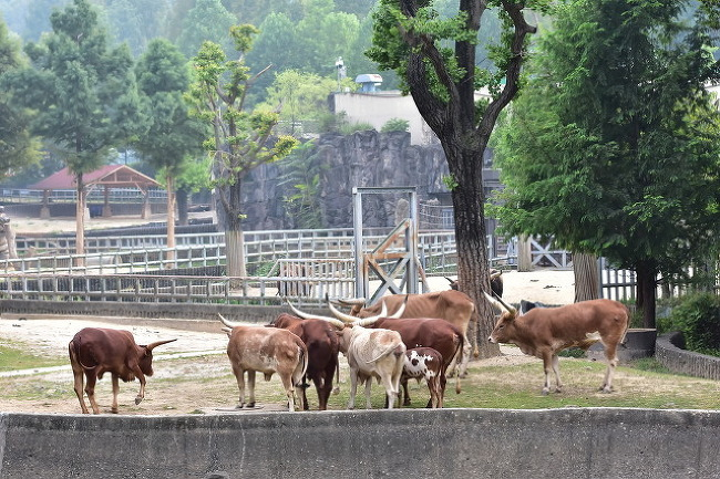 서울대공원 큰뿔소
